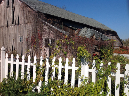 Old barn and white picket fence