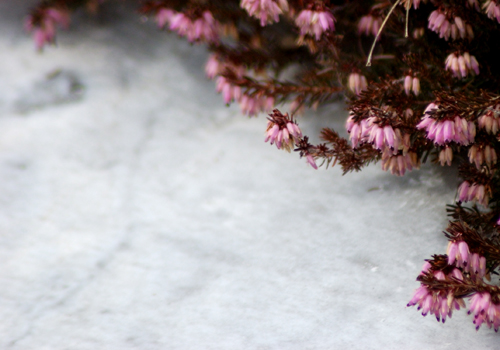 pink flowers on a white marble floor